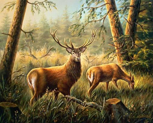Охота в псковской области